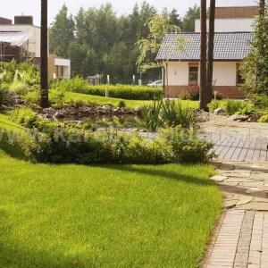 Озеленение