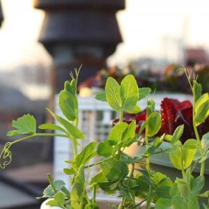 Современный огород: 8 основных растений