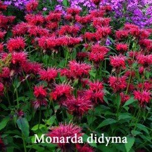Магия ароматного сада