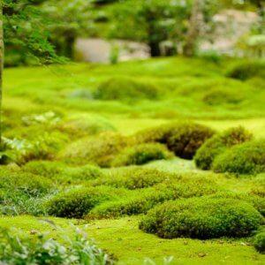 Мох в саду — декоративный акцент