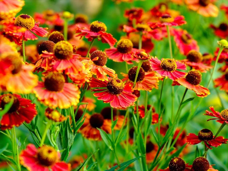 ТОП многолетников в вашем саду. Часть 2